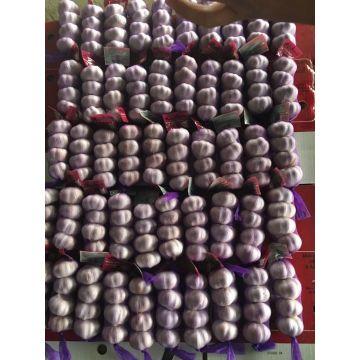 Ail violet frais dans un sac de 4p / mesh