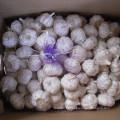 Alho fresco novo com saco, embalagem da caixa