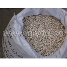 White Kidney Bean in PP Bag