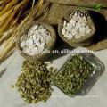 China Pumpkin Seed GWS