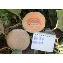 NSM131 Qinai bande blanche ronde graines de melon sucré, type galia
