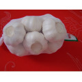 Großhandel China Reiner Weiß Knoblauch Niedriger Preis
