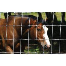 Cerca de gado / Cerca de campo / Cerca de pastagem (Fornecedor profissional)