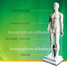 Menschliche Intelligente Stimme Systerm Akupunktur Punkt Modell