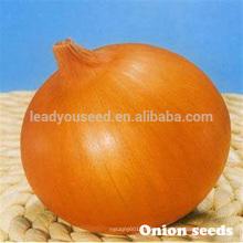 ON01 Dayu madurez temprana f1 híbrido semillas de cebolla amarilla precios