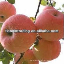frische Apfelfrucht