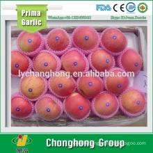 Fuji Apples Packed 18kg/carton