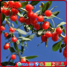 preço razoável Siyah goji berry goji berries ningxia goji vendas por atacado