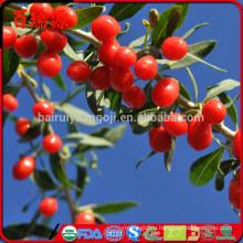 разумная цена Сиях ягоды годжи ягоды годжи нинся годжи оптовые продажи