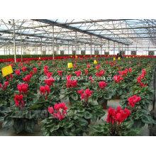 100% orgânica Sophocarpidine planta extrato marinho 10-60%