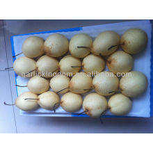 Ya Pear Hot Sale in low price