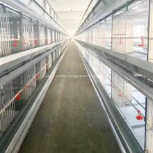 Broiler farming equipment