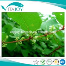 Pure Natural 50% -98% Extracto de resveratrol / polygonum cuspidatum