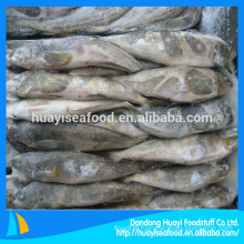 frozen fat greenling whole round companies