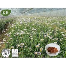 Extracto de Erigeron Breviscapus orgánico natural, extracto de Fleabane de Shortscape Breviscapine