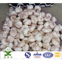 Normal Alho Branco 6.0cm em 10kgs Carton Loosely