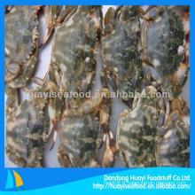 Fournisseur de crabe de boue fraîche et congelée