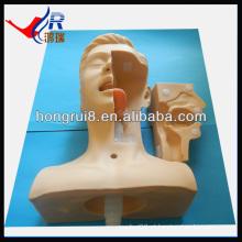 Sucção avançada Simulação médica, treinamento de sucção