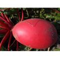 HR04 Ronghe semillas de rábano rojo OP en semillas de hortalizas