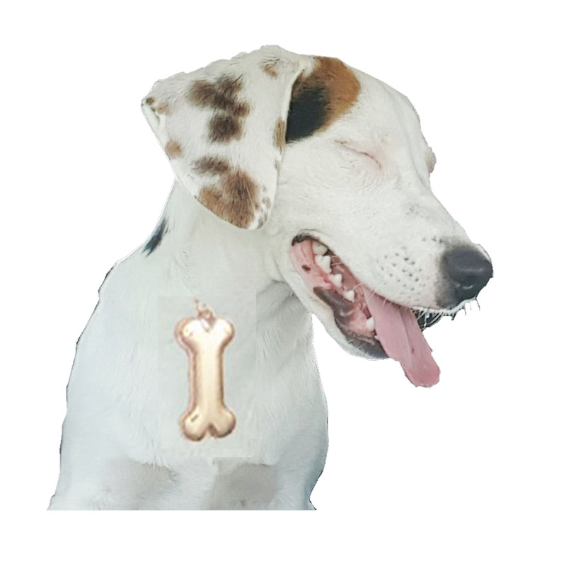 Dog Bone Keyrings