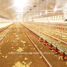 Equipamento automático de criação de frango para a fazenda moderna