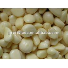 chinese normal white garlic