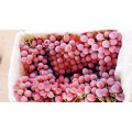 Segar Qulality Red Grape Bagus
