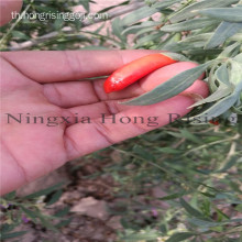 Ningxia Certified Organic Goji berries คุณภาพสูง