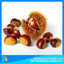 Natual green chestnut 2014 New crop fresh chestnut China