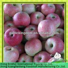 China fresco vermelho royal gala apple
