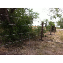 забор забор ограждение животное/ животное