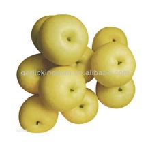 Pera de oro rica en Vc, Vb, buen sabor y forma pera con mejor precio pera