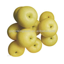 Golden pear rich in Vc,Vb,good taste and shape pear with best price pear
