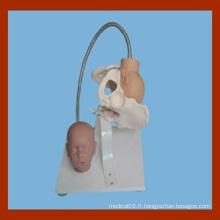 Bassin féminin avec modèle de tête fœtale, modèle de démonstration de l'accouchement