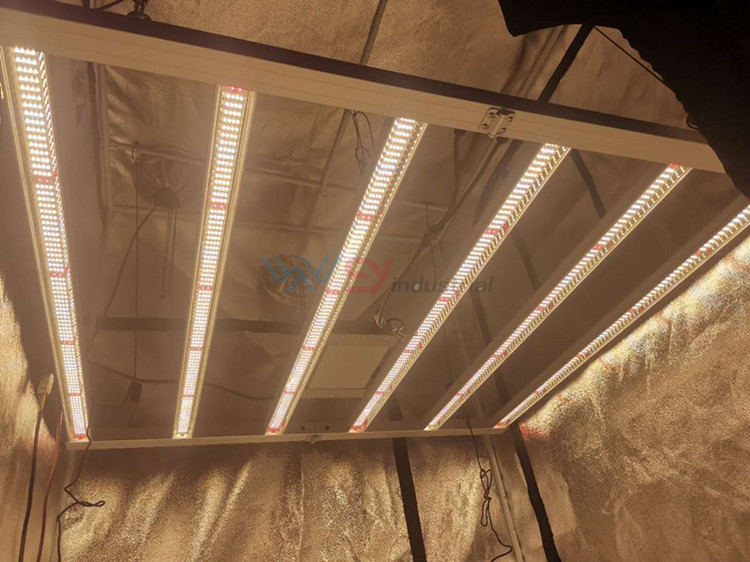 Led Grow Lights New Zealand
