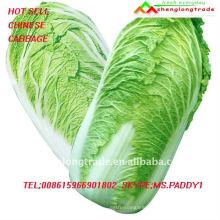 FRESH Chinese Cabbage MOQ 5TON