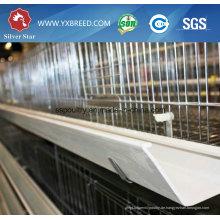 China Low Cost Layer Käfig mit Geflügel Ausrüstung