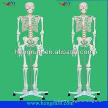 Modelo de esqueletos humano plástico de tamanho real avançado
