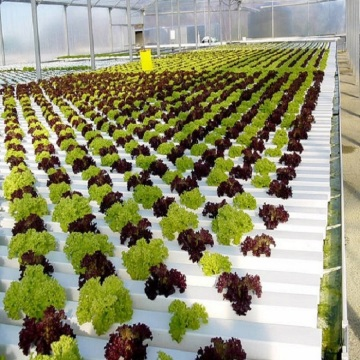 Hydroponic Commercial Flat Flat Hydroponic