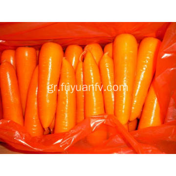 XIAMEN 316 BEST CARROT