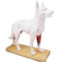 Compre um 12005 Animal Dog, Half Acupuncture e Half Anatomy Model Anatomical Dog