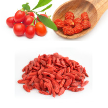 Convencional China Goji berry con alta calidad