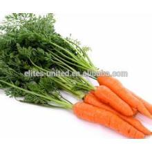 Hot sale! 2014 Fresh Carrot