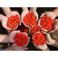 Zhongning Premium Red Wolfberry
