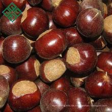 chinesische Großhandelskastanie der süßen Kastanie zum Verkauf