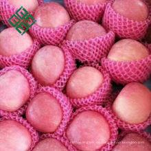 Chinesischer frischer grüner Apfel Preise erstklassige frische Äpfel