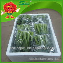 Wholesale pickled IQF Chinese cabbage price