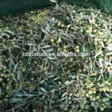 Quality Best-Selling olive fruit harvesting net