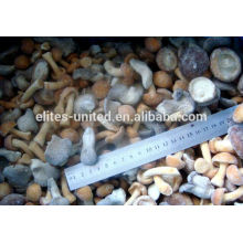 IQF frozen market prices for mushroom mixed mushroom