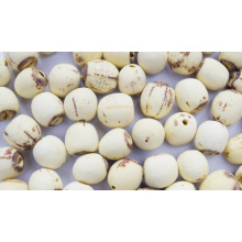 Organic Lotus Seed in Bulk, Lotus Seed Without Core
